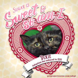 Can one of our special kitties be your Valentine? REDUCED ADOPTION FEES!