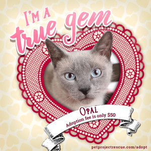 PPR-Valentines-Day_Opal