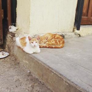 Cuba Street Cats!